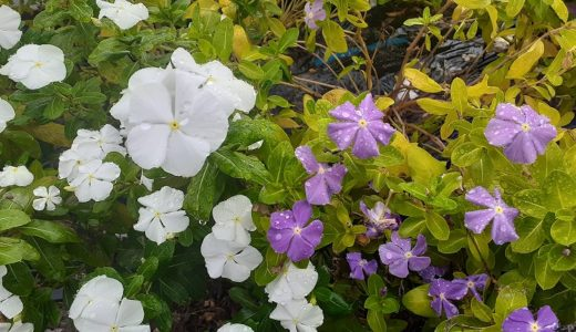 名前のわからないお花の名前を簡単に調べる方法